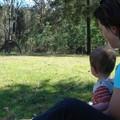 rencontre_avec_kangaroos