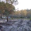 Future entree lotissement bois des colonies andernos