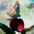 m_viard_papillon