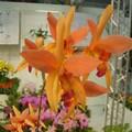 Orchidee_2006_02_19__89_