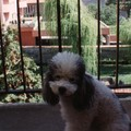 1991 - Poupoune balcon 