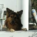 Le plus beau : Roxy
