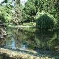 Le bassin du Jardin Royal