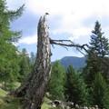 _tmp_arbre04