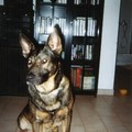 prince my dog