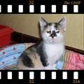 MITSSY, le chaton de ma copine Caro.