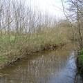 Les marais d'Audubon