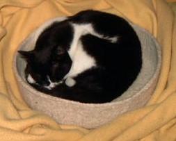 Kitty bed, modèle de Wendy Johnson / Mars 2005