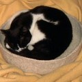 Kitty bed, modèle de Wendy Johnson / Mars 2005