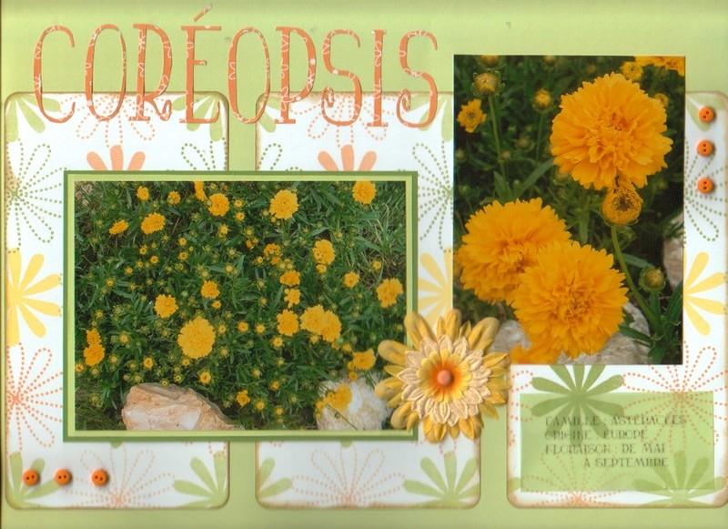 coréopsis