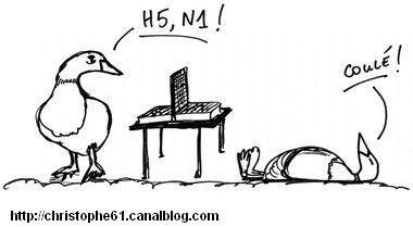 jeux H5N1