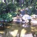 Jardin du palais Monaco