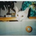Ida qui joue à cache-cache