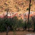 Tafraout (Maroc)