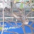 Oiseau de la Seine