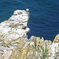 Beg ar C'hastell meur cormorans