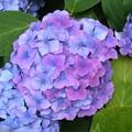 Boule bleue et mauve