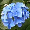 bleu pur