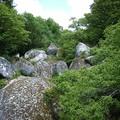 au milieu des pierres: des arbres