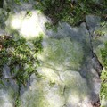 pierres dressées dans la forêt