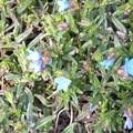 la perle bleue de Camaret