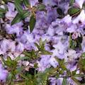 les fleurs fanées de mon préféré