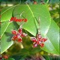 Fleurs Siam