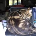 Privée d'ordinateur.. Il ne voulait pas partir! rien à faire..