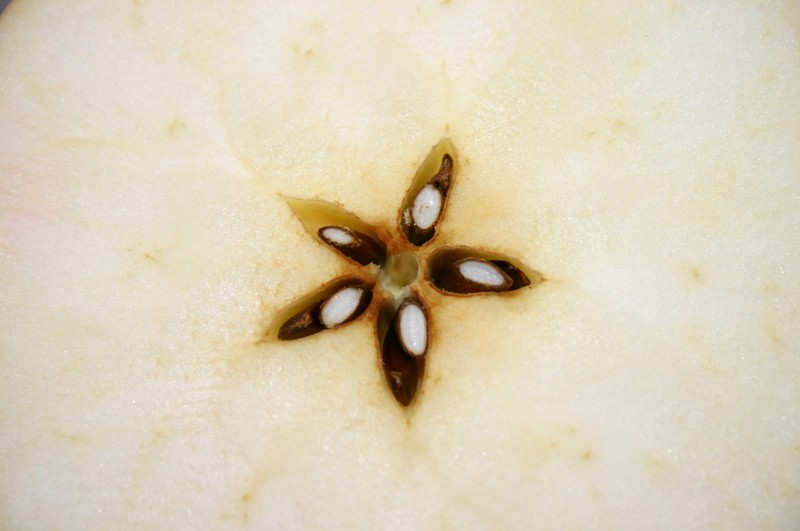 Pomme, vu sous un autre angle