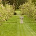 Allée des Magnolias en fleurs