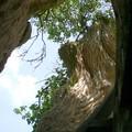 Un escalier en colimaçon dans le tronc