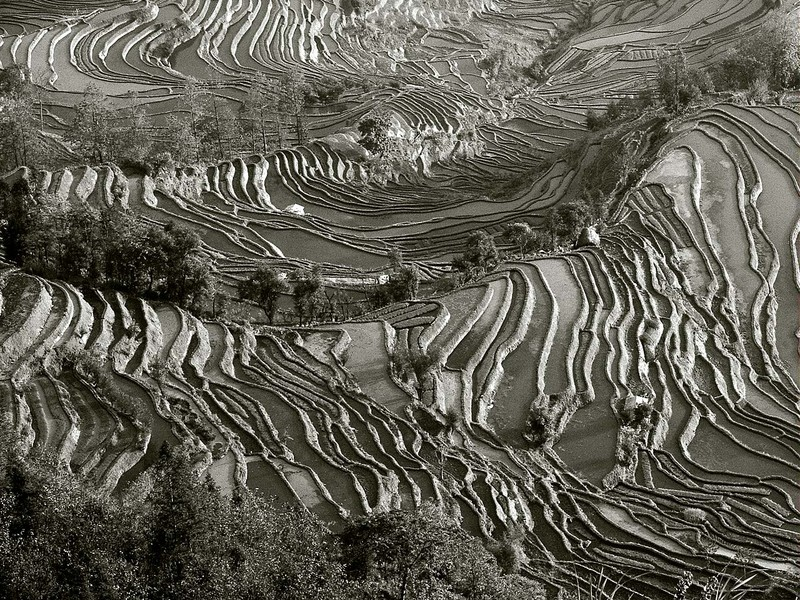 Terraces in black and white