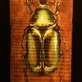 the beetle 1