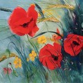 coquelicot_blefran_oise_dubourg