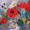 coquelicot_margueritefran_oide_dubourg