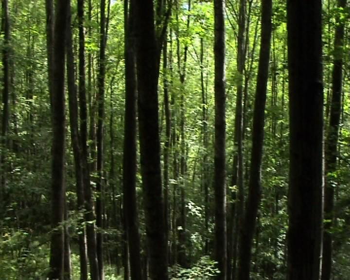 _Volumes_Sans_titre_fichiers_psd_slovakia2005_forest_pm4_copie