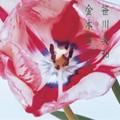 Miwa_Sasagawa___Kinmokusei_Warai