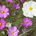Wakamatsu (Kitakyushu) - Fleurs de