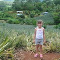 Un champ d'ananas et une nana