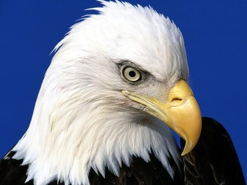 Je ne sais pas vous, mais moi j'adore les Aigles !  m-Aigle