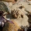 tête de sable