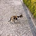 Chat_de_Braga