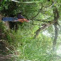 Balade sur Rangitoto