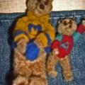 2 ours en laine cardée