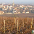 Bourgogne_2004_100