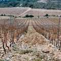 Languedoc 2004