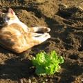 Le chat lascif