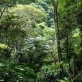 Foret_tropicale__2_