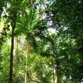 Foret_tropicale__9_