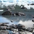 Glacier_Bateau__29_
